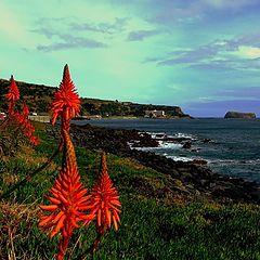"""photo """"Azorean Calendar - December"""""""
