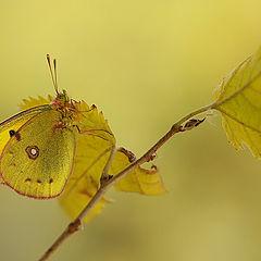 """фото """"Листья желтые..."""""""