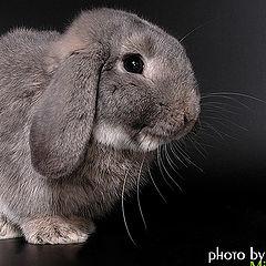 """photo """"Rabbit"""""""