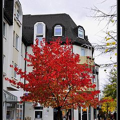 "фото ""Красное дерево"""