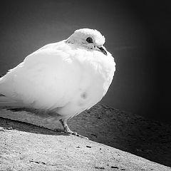 """photo """"Bird of world"""""""