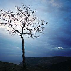"""photo """"Tree on sunset"""""""
