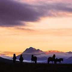 "фото ""Icelandhorses in sunseth"""