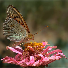 "фото ""Poem of Nature"""
