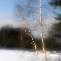 """фото """"зимой в Серебряном Бору"""""""
