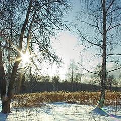 """фото """"Солнечный полдень."""""""