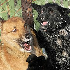 """photo """"DOgs frightened each Other"""""""
