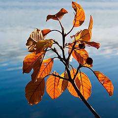 """photo """"Light of autumn"""""""