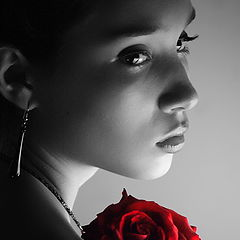 """photo """"The Red Rose"""""""