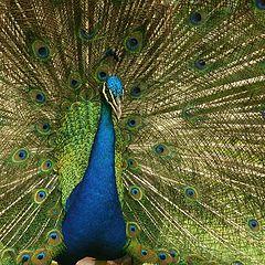 """photo """"Beauty bird"""""""
