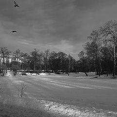 "photo ""Black and White Winter"""