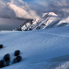 "photo ""White landscape"""
