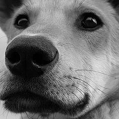 """фото """"Как пес свой нос в об*ектив совал"""""""
