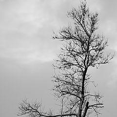 """фотоальбом """"просто деревья"""""""