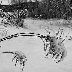"""фото """"Черная графика зимы или... сомнения..."""""""