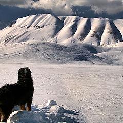 "photo ""the snow-watcher"""