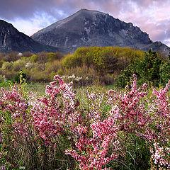 "photo ""The Heather blossom..."""