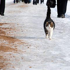 "photo ""Walking by itself"""