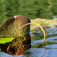 "photo ""Interlocking and reflection"""