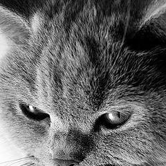 """фотоальбом """"кошка в чб"""""""
