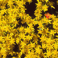 """фотоальбом """"FLOWERS, FLORE & DETAILS"""""""
