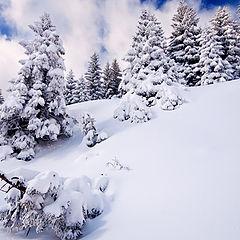 "photo ""Winter beauty"""