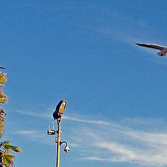 """фото """"Gulls"""""""