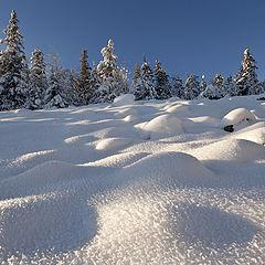 """photo """"Snow scale / 0190_0046"""""""