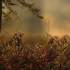 """фото """"Landscape_993"""""""