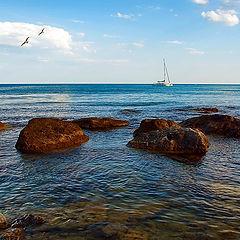 """фото """"Морские камушки"""""""