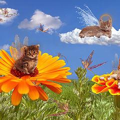 """фото """"Умеют ли коты летать?"""""""
