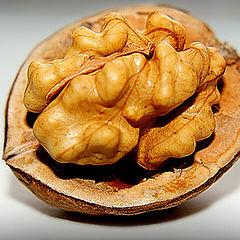 "photo ""макро,грецкий орех"""