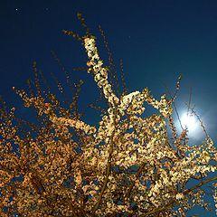 """фото """"Blooming at Night"""""""