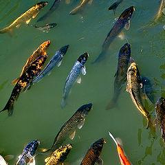 """фото """"рыбки"""""""