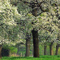 """photo """"springtime in Belgium"""""""