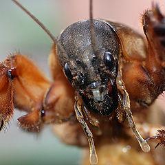 """photo """"макро,насекомые"""""""