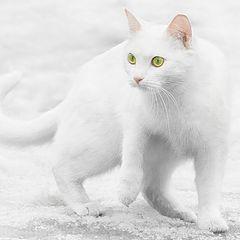 """photo """"snOw cOlOr cat"""""""