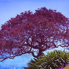 "фото ""Дерево , парящее над склоном"""