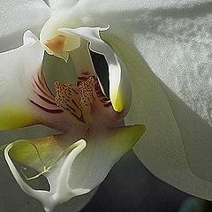 """фото """"Orquidea"""""""