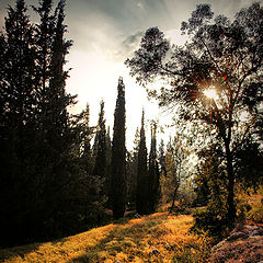 "photo ""In a Jerusalem's forest"""
