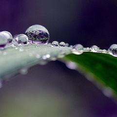 """photo """"макро,капли,роса,дождь"""""""