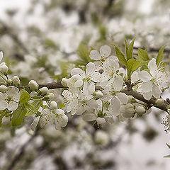 """фото """"Весна..Сады в цвету..."""""""