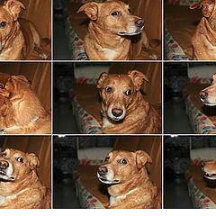 "фото ""My frien Cocas"""