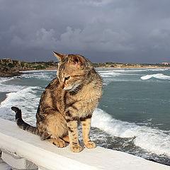 """фото """"promenade"""""""