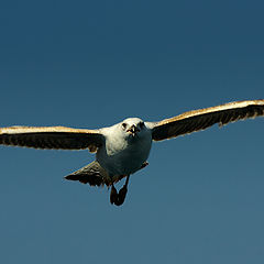 """фото """"I Believe I Can Fly"""""""