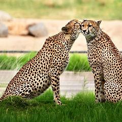 "фото ""first kiss"""