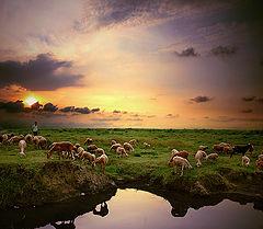 "photo ""Meadow"""