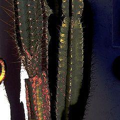 """photo """"cactus"""""""