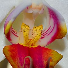 "photo ""Orchid Macro"""
