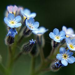 "photo ""макро,цветы"""